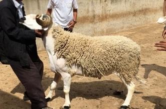 """سياسي مغربي يدعو رئيس الحكومة إلى إلغاء عيد الأضحى بسبب """"كورونا"""""""