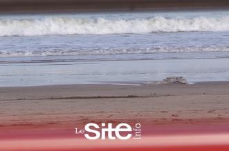 """""""ميني تسونامي"""" يضرب شاطئ المحمدية والسكان: أمواج عاتية كانت بالأمس -فيديو"""